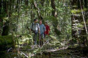On a guided walk through Beech Forest